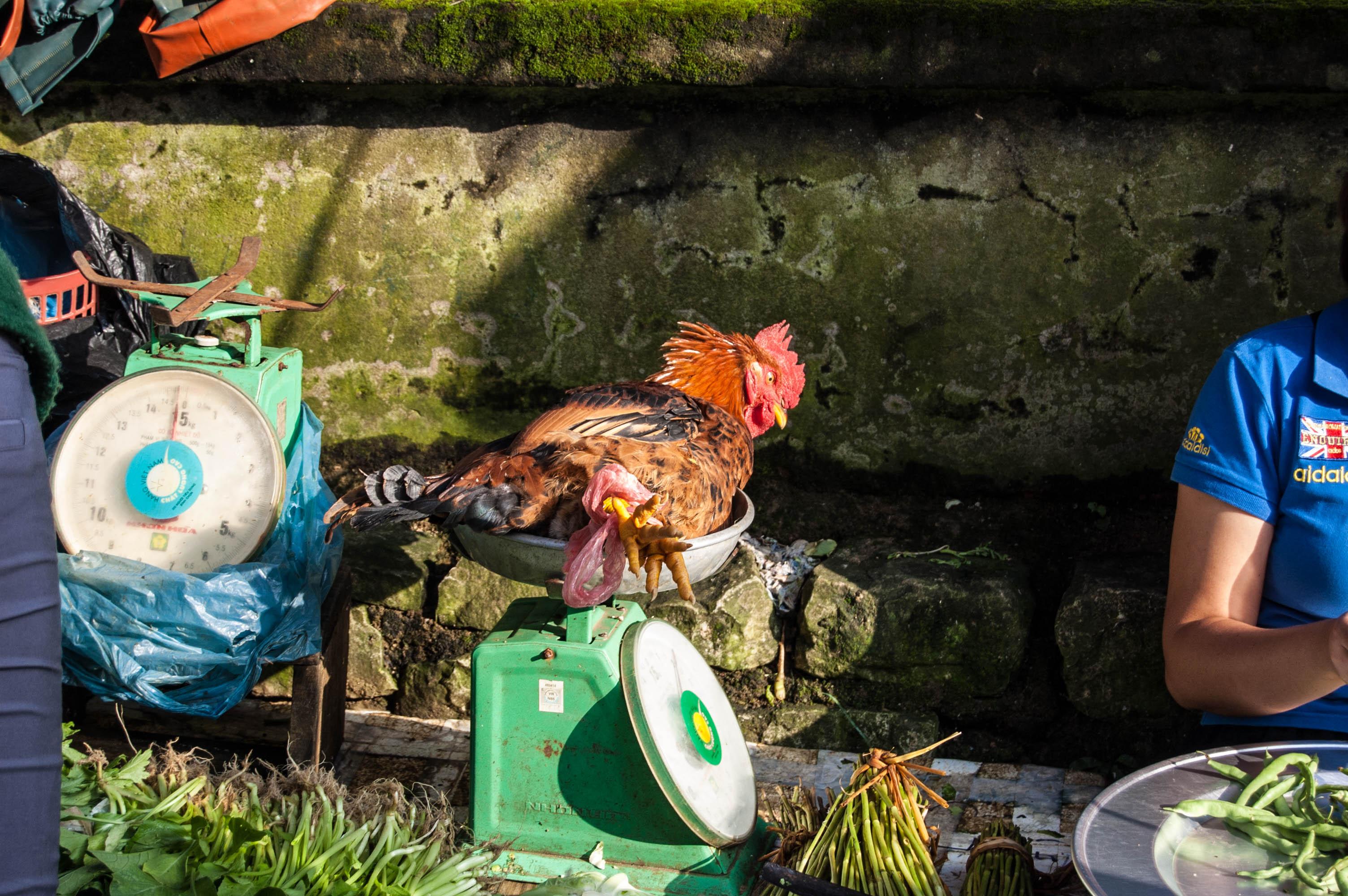 20120929_Vietnam_2692